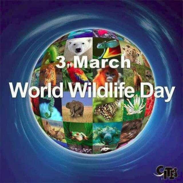 World Wildlife Day Wishes Images