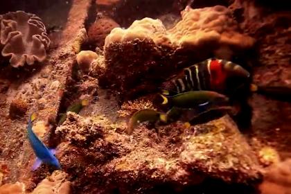 Lokasi Menyelam di Natuna Kepulauan Riau - Dive Sites