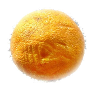 an elderly but delicious orange