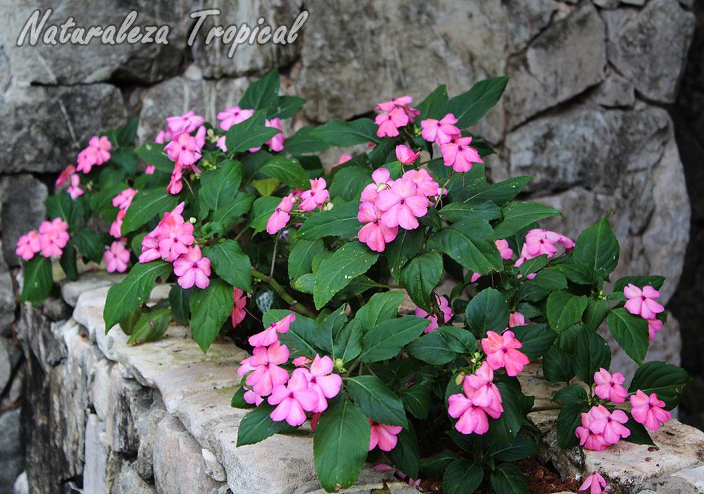 Naturaleza tropical aspectos a tener en cuenta si quieres - Piedras para jardineras ...