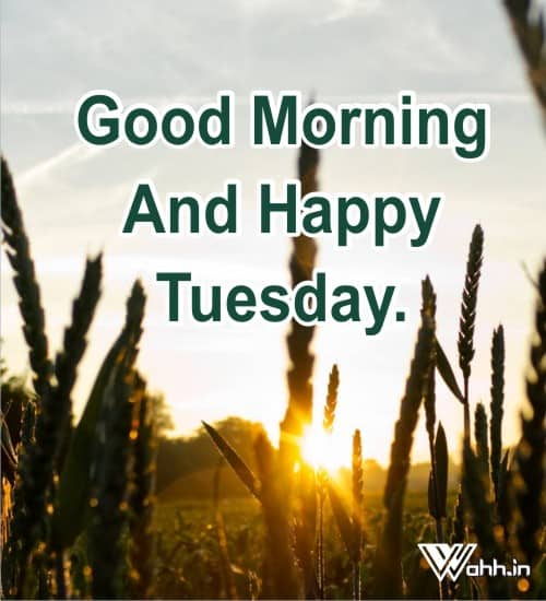 Good-Morning-And-Happy-Tuesday.