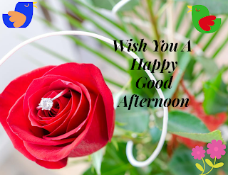 Best Good Afternoon Images, Good Afternoon English Images Status, Good Afternoon HD Wallpaper, Best Good Afternoon Images, Good Afternoon English Images Status, Good Afternoon HD Wallpaper,