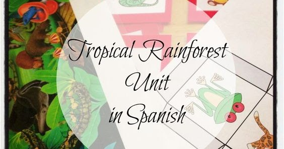 how to say rainforest in spanish