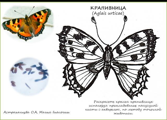 раскраска-бабочка-крапивница-пуантилизм
