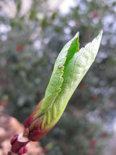 2 januari in mijn tuin ...