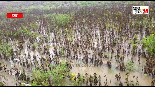रुक रुक कर हो रही बारिश से किसानों की सोयाबीन सड़ी
