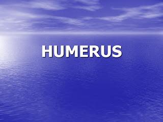 HUMERUS .pdf
