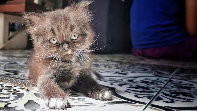The Frakarsa's cats