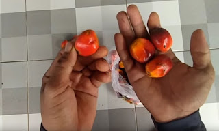 buah sawit segar