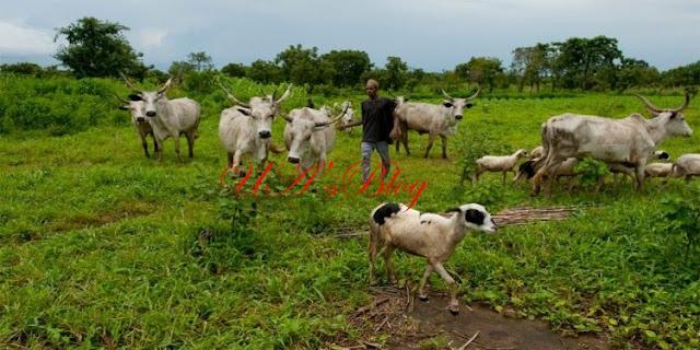Anti-Open Grazing: Fulani herdsmen sue Oyo Govt, House of Assembly