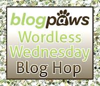 http://blogpaws.com/executive-blog/pet-parenting-health-lifestyle/wordless-wednesday/a-years-worth-of-social-media-improvement-posts-blog-hop/