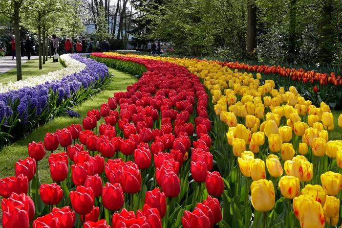 keukenhof 2016 contando los d as para ver tulipanes y m s bulbos en flor. Black Bedroom Furniture Sets. Home Design Ideas