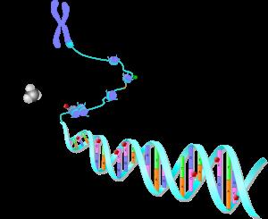 Çevre Koşullarının Genlerle ve Hastalıkların Kalıtımıyla İlişkisi