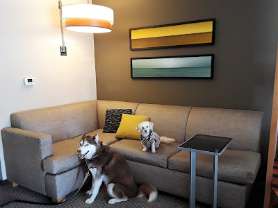 Pet friendly Hyatt Place Hotels.  Fredericksburg Virginia. Dog Friendly Travel