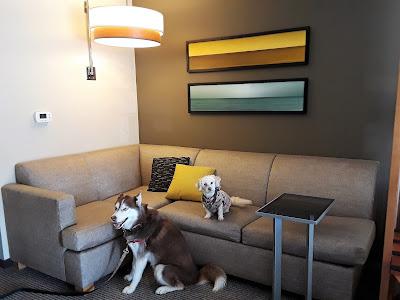 Great dog friendly hotel, Pet friendly Hyatt Place Hotels. Pet friendly hotel in Florida,  Dog Friendly Travel