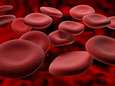 Giúp điều hòa lượng và tuần hoàn máu trong cơ thể