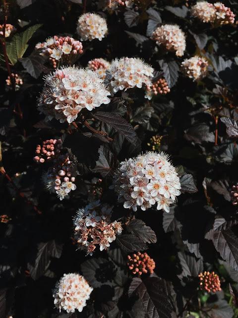 flowers on dark leaves