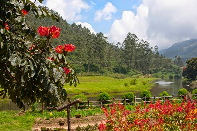 Blossom International Park in Munnar