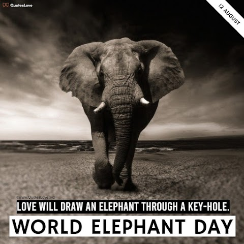 29 [Best] World Elephant Day 2021: Quotes, Sayings, Wishes, Greetings, Images, Pictures, Poster