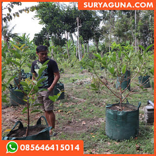 Planter Bag Tabulampot Berbagai Ukuran