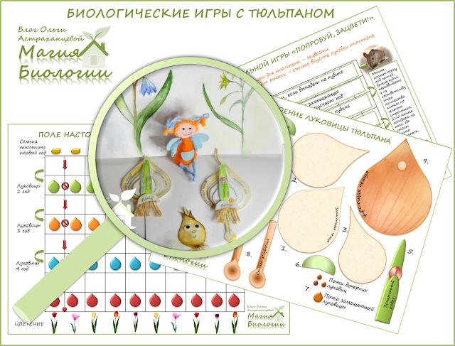 биологические-игры-с-тюльпаном