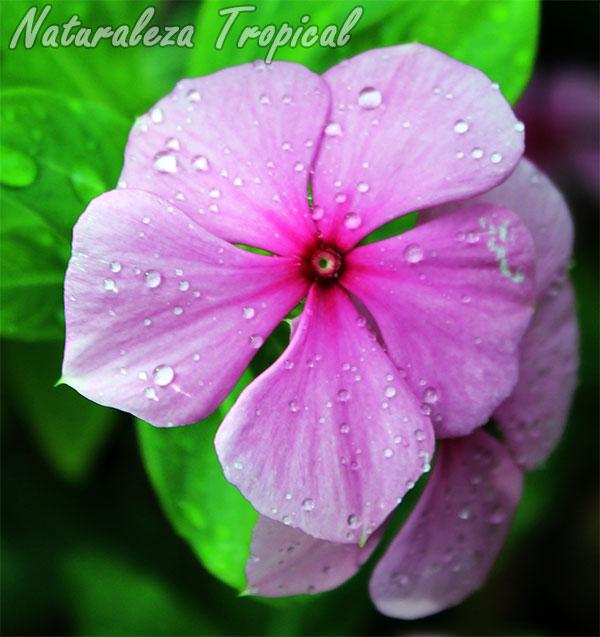 album de plantas of cuales son las plantas ornamentales