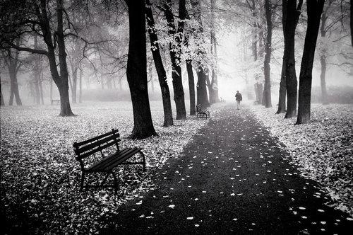 Ainda Que Eu Andasse Pelo Vale Da Sombra Da Morte Não Temerei Mal Algum: Ovelha Ouvinte