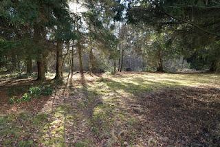Bäume lassen einzelne Sonnenstrahlen auf den Boden scheinen