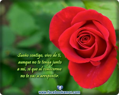 Imagenes Rosas Rojas Con Frases