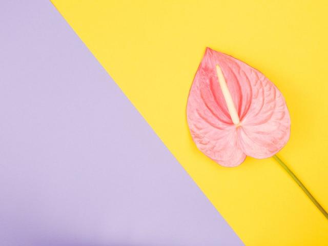 11 Alasan Vagina Anda Beraroma Sedikit ... Mati