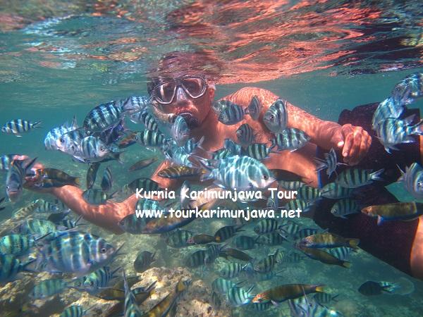 foto snorkeling di karimunjawa