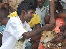 7 Orang yang Menikah Dengan Hewan