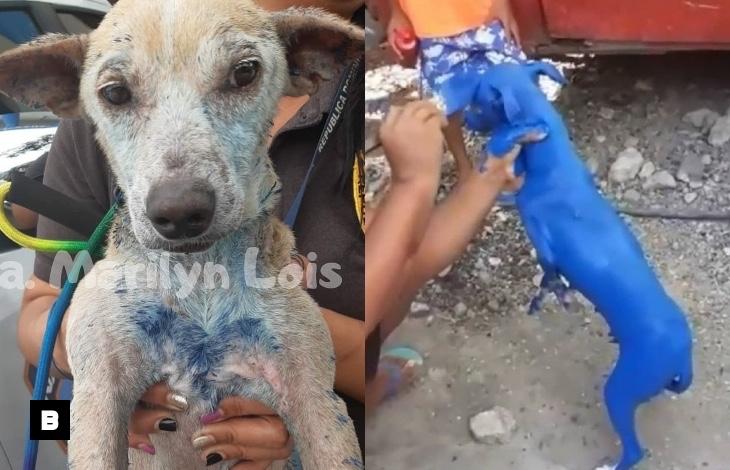 Fotos: Perro pintado de azul recupera su color
