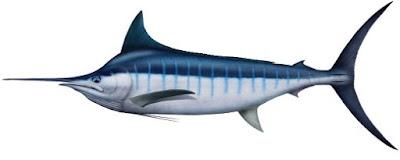 Jenis - Jenis Ikan Air Laut Ekonomis Penting [Bagian 10]