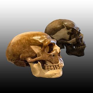 Come ricostruire evoluzione cervelli grandi: modello matematico