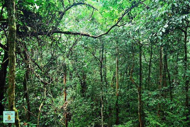 Selva de Malasia
