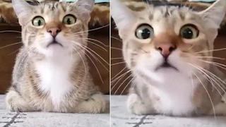 Γάτα βλέπει με προσήλωση θρίλερ και οι αντιδράσεις της δεν υπάρχουν