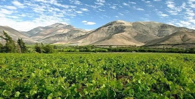 Elqui Valley, North of Chile.