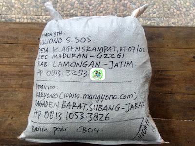 Benih Padi Pesanan  SULIONO.S.SOS Lamongan, Jatim.   (Setelah di Packing).