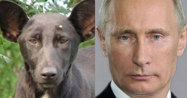 Dog Murdered By Russian Secret Services Because He Looked Too Much Like Putin, Claims Owner