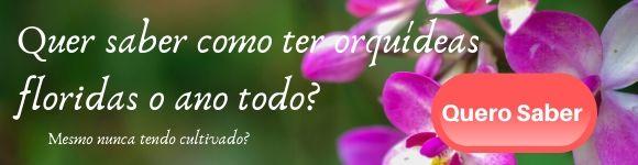 Imagem - Como ter orquídeas floridas o ano todo