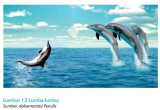Lumba-lumba www.simplenews.me