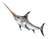 Kılıç balığını önden gösteren bir çizim