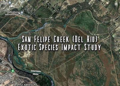 San Felipe Creek, San Felipe Springs, Del Rio, Exotic Species, Del Rio Texas, Fishing Del Rio Texas, Texas Parks and Wildlife, Texas Tech University