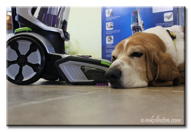 Basset next to Bissell steam cleaner