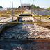 DIA MUNDIAL DA ÁGUA: Água que chega às torneiras dos manauaras passa por rígido controle de qualidade