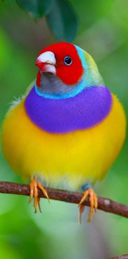beautiful-bird-with-different-colors