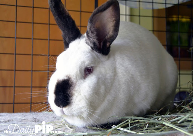 Adopting a rabbit with special needs from a shelter
