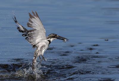 Update on the AutoFocus Workshop and Birds in Flight Training