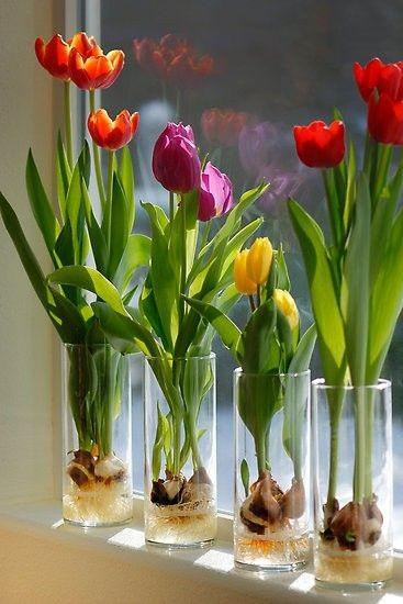 Resultado de imagen de tulipanes en agua